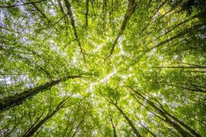 arboles verdes en la naturaleza